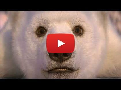 花样冰舞Dancing on Ice 即将在二月ITV Choice重磅回归