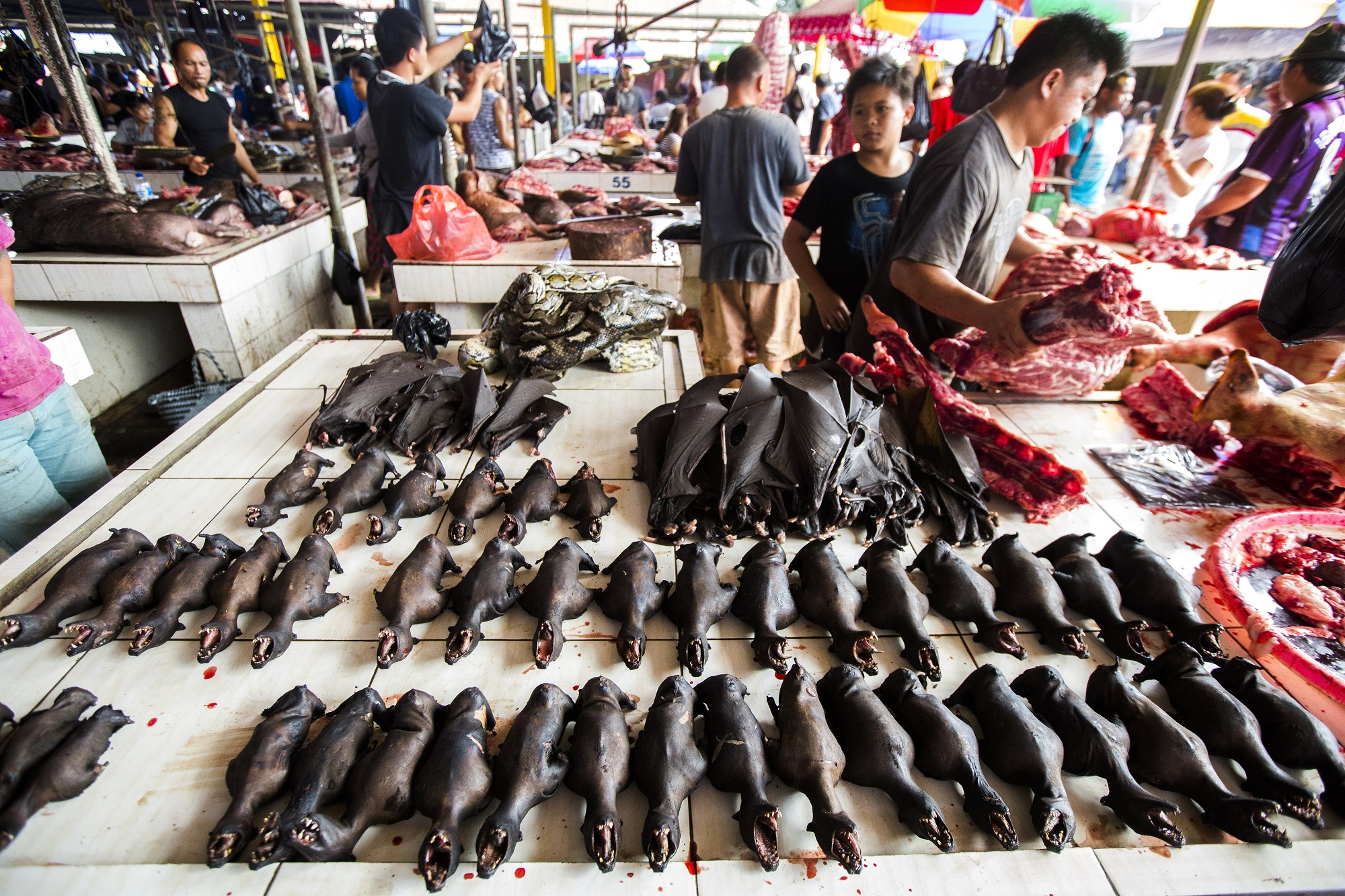 Global Initiative Outlines a One Health Approach to Reforming Wildlife Trade Laws
